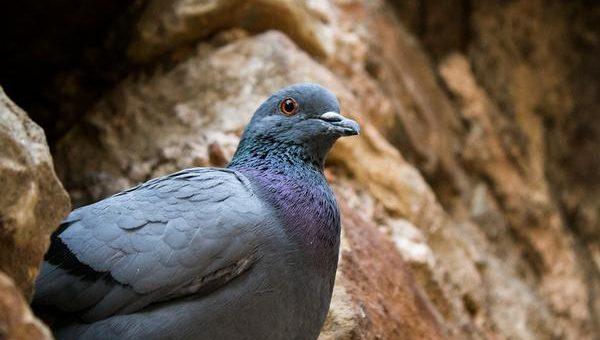 Sklep z kolcami na gołębie
