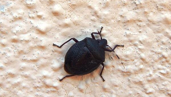 Skuteczne zwalczanie insektów