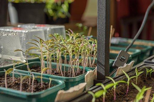 Szklarnia do hodowania roślin w domu